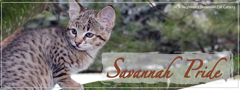 Savannah Pride