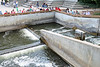 Grand River Fish Ladder