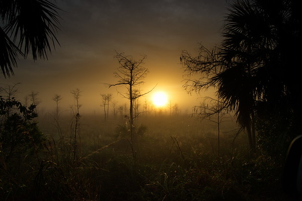Big Cypress National Preserve, Florida, Loop Road