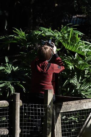 Florida, Palm Beach Zoo, West Palm Beach