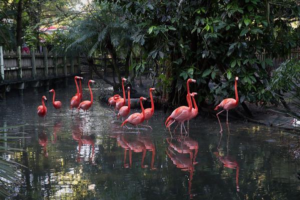 Flamingo, Florida, Palm Beach Zoo, West Palm Beach