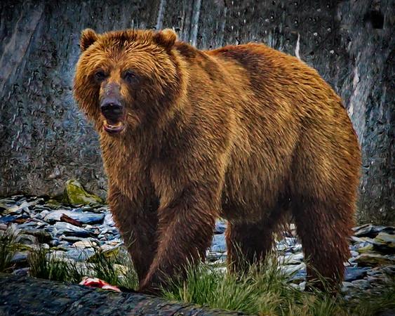 Alaska, Artsy, Brown (Grizzley) Bear, Port Valdez, Prince William Sound, Valdez