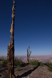 Arizona, Grand Canyon, Grand Canyon National Park, North Rim, Roosevelt Point