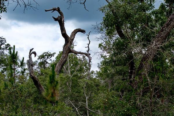 Chassahowitzka WMA, Florida