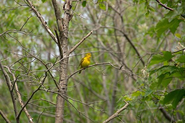 Birds, Corner Brook, Flowers, Margaret Bowater Park, Newfoundland