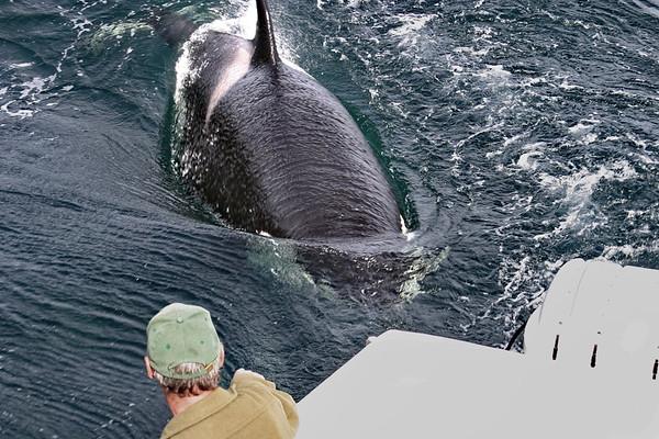 L'Anse Aux Meadows, Newfoundland, Whale