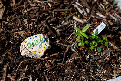 The Early Childhood Development Center elementary students decorate stones to identify plants growing in the ECDC Garden.