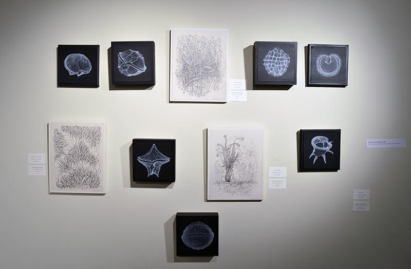 p-Art Center Open House-Artist-in-Residence-Program-Mystery-of-Marine-Life-Hartsfield_0865