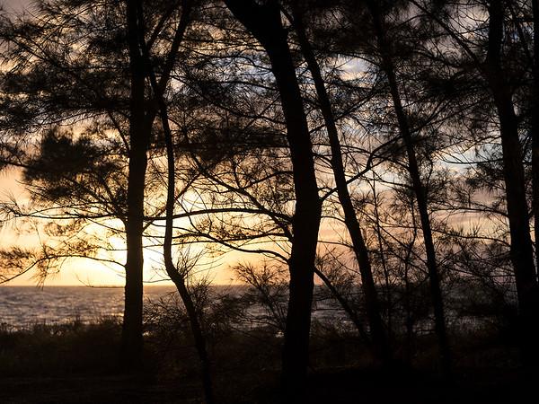 017  Sunset at Bob's Austrailian Pines