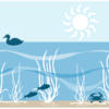 seagrass diagram by Jane Hawkey