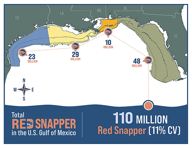 Snapper-infographic-1