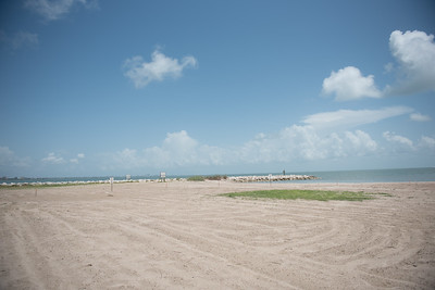 In the closed off area on the University Beach there are around 3 nests that are well camoflauged to the environment.