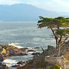 THE LONE CYPRESS, 17 MILE DRIVE, CALIFORNIA.