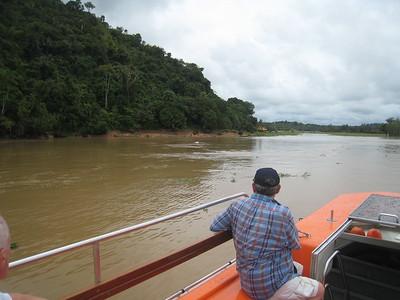 Boca de Valeria, Amazon River, Brazil (pink dolphin)
