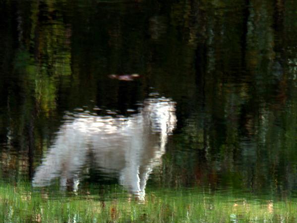 Reflections on Man's Best Friend
