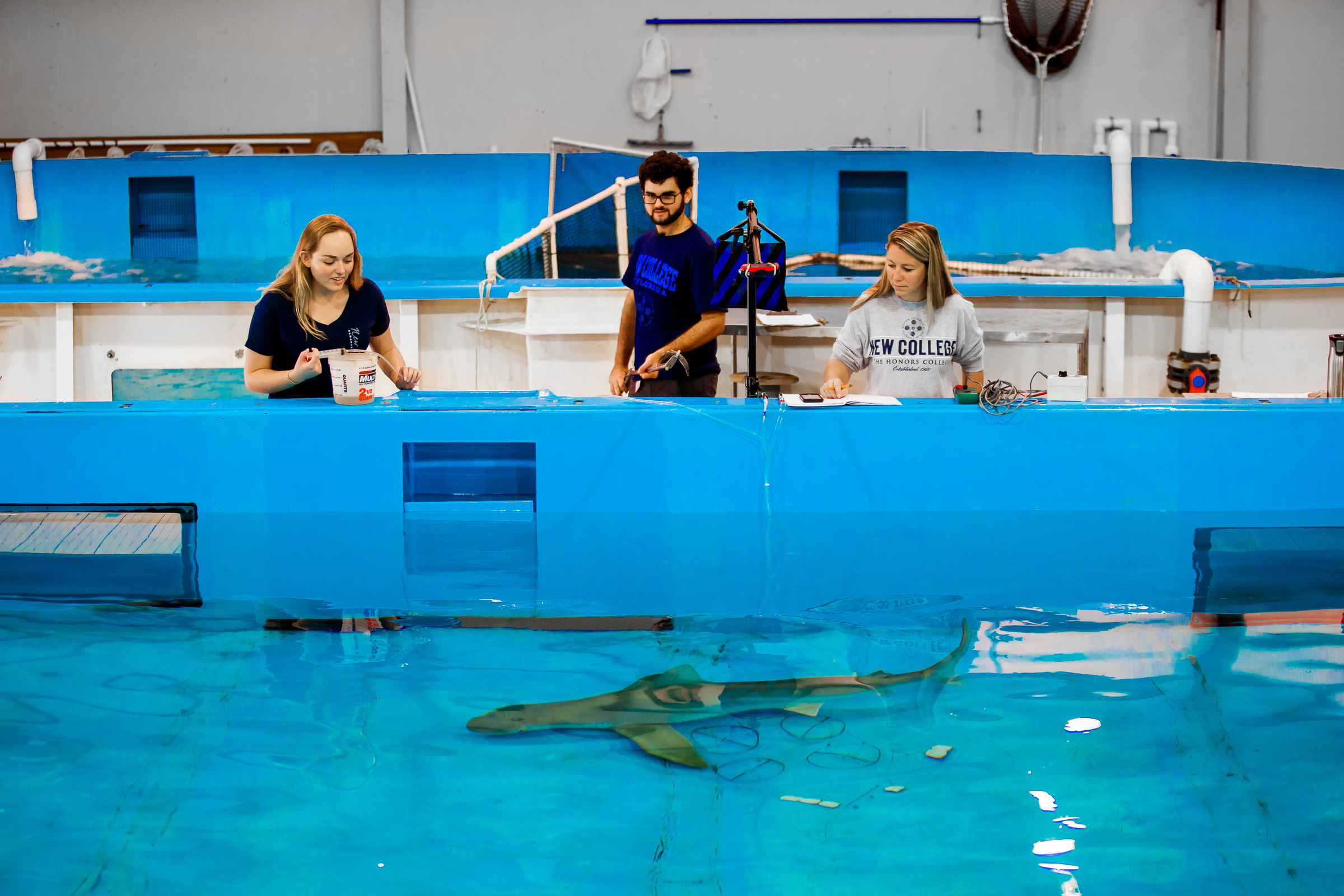 New College of Florida students do research on sharks at Mote Marine Laboratory in Sarasota, as part of an Independent Study Project in 2015.
