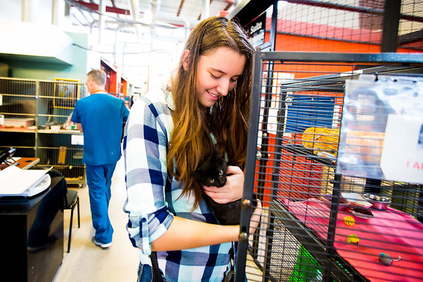 Students at New College of Florida volunteered at the Cat Depot rescue center in Sarasota during orientation week for the start of the 2016-17 academic year.