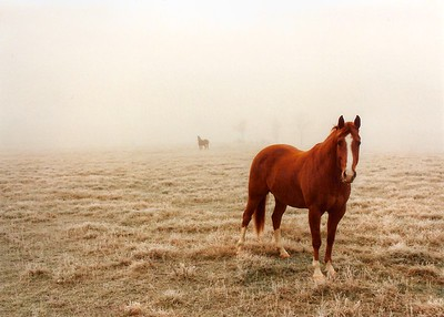 """Horses in the McDaniel Fog"""