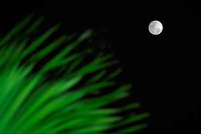 Lunar Palms