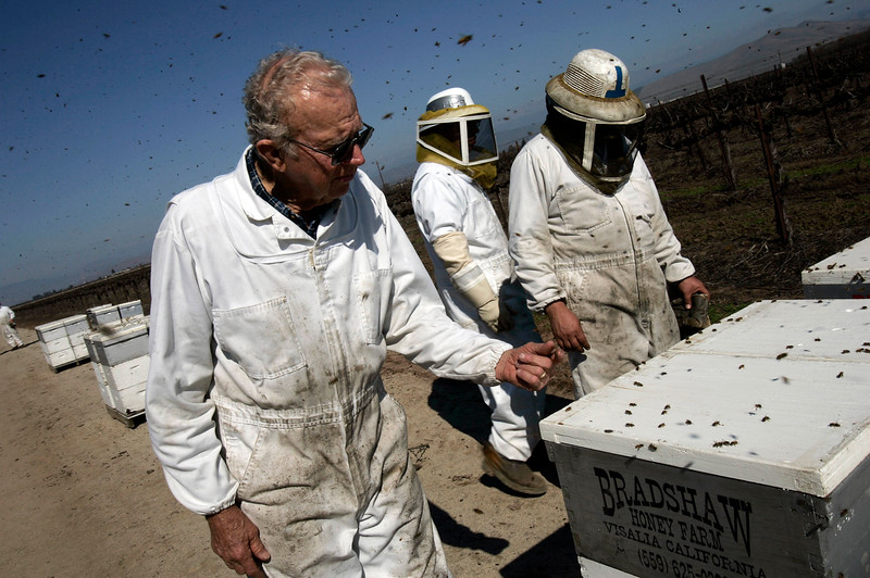 "Howard Bradshaw, left, his grandson Andy Bradshaw and Isaias Corona work with ""Bradshaw Honey Park"" bee hives, near Visalia, Tuesday, February 20, 2007. Photo by: Ann Johansson Bradshaw has lost 40% of his hives this year as bees mysteriously disappear."