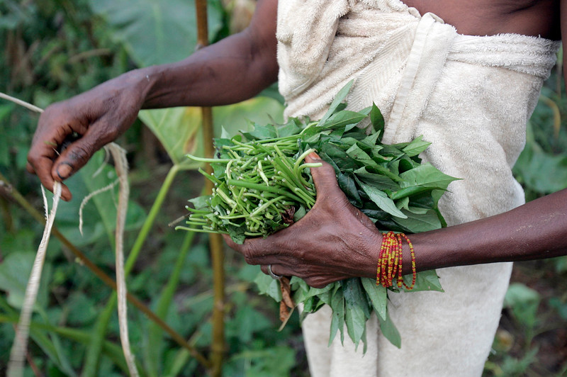 A woman ties up potato leaves in Kabala, Sierra Leone, November 26, 2008.