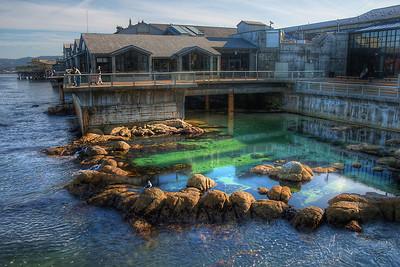 Monterey Bay Aquarium pond