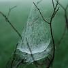 Pasture Lace