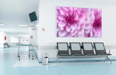 Blumenbild für den Wartebereich einer Klinik