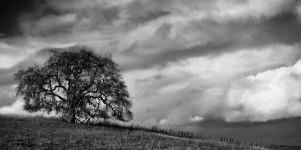 Teresa Tree, V2