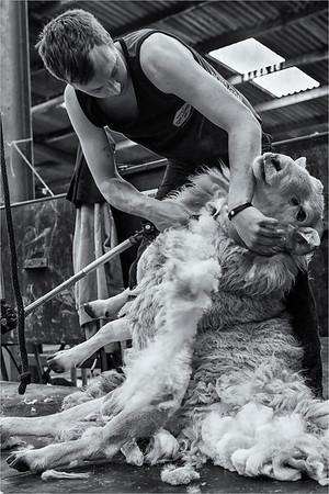 Sheared