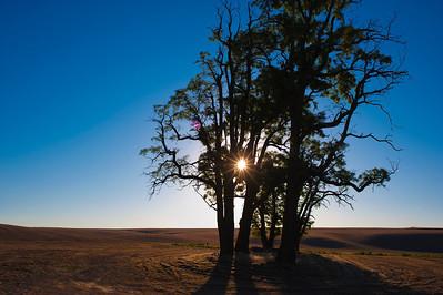 Shortly after sunrise north of Athena Monday July 15, 2013. Oregon Dayshoot 30. © 2013 Fred Joe / www.fredjoephoto.com