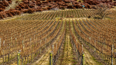 Gibbston Vines