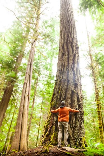 Tree Hugger, Olympic National Park