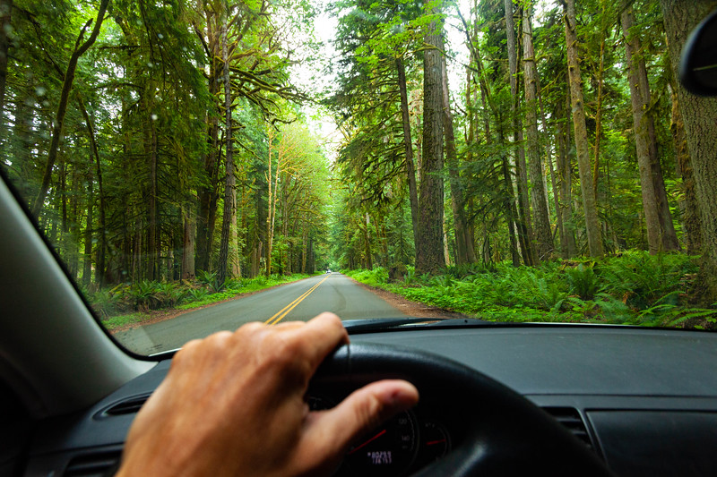 Driving thru old growth trees in Olympic National Park, WA