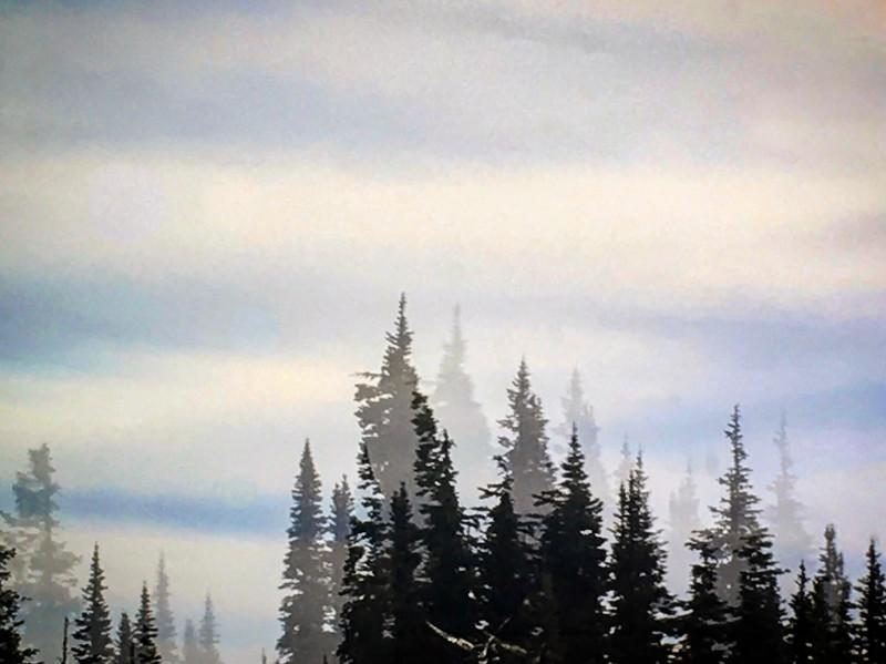 Window Reflection of Forest, WA USA