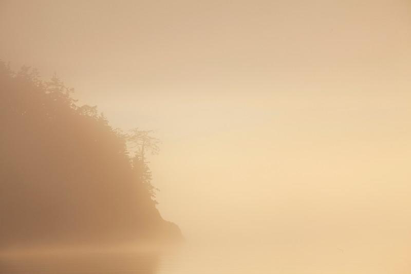 Fog enshrouded Pacific coastline