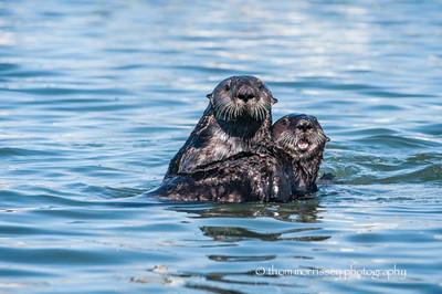 Leap otter anyone?