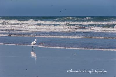 Walking along the beach ...