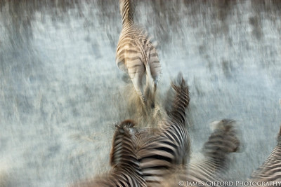 Dreaming of Zebras