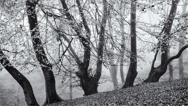 The magic Of Mist Monochrome