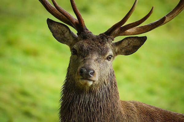 Studley Royal Deer Park
