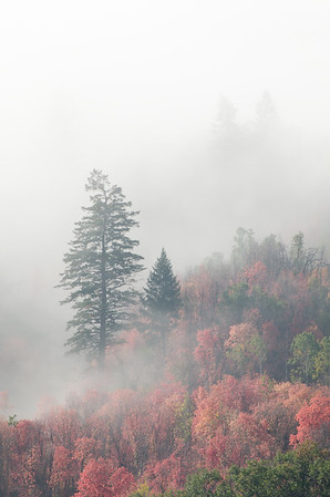 Misty Autumn Morning