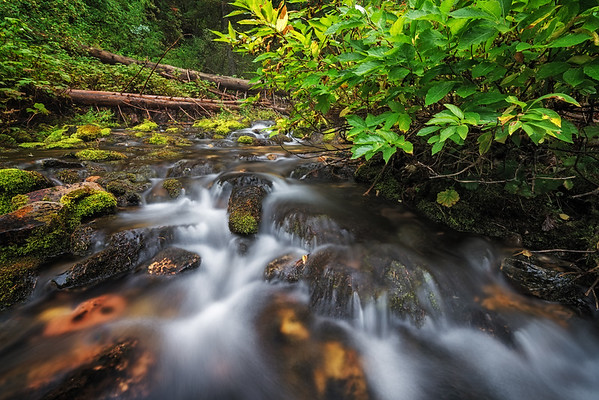 Mossy Autumn River 5