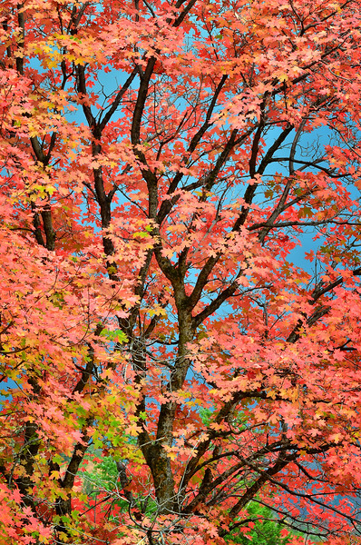 Reds of Fall