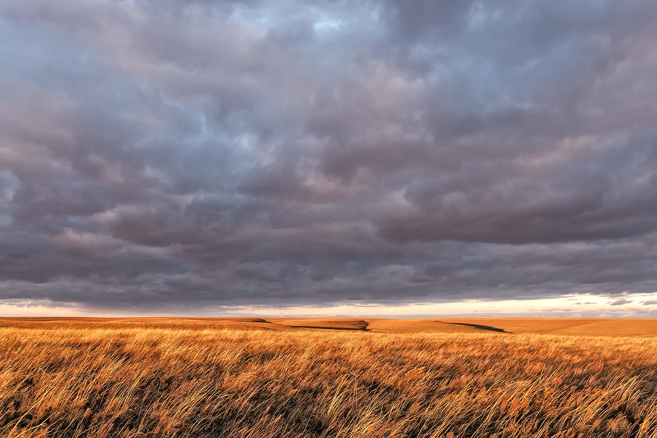December Tallgrass, Last Light