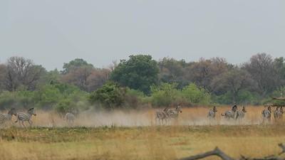 Africa Wild