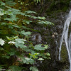 Falling water and maple leaves, Madison Falls, Olympic National Park, Washington.