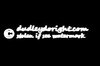 Copyright stolen white copy