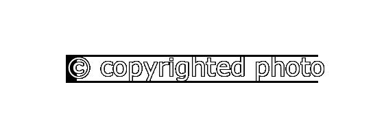 Copy-hor-LB