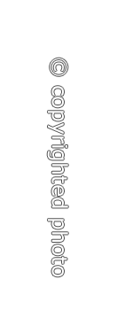 Copyr-vert-RB
